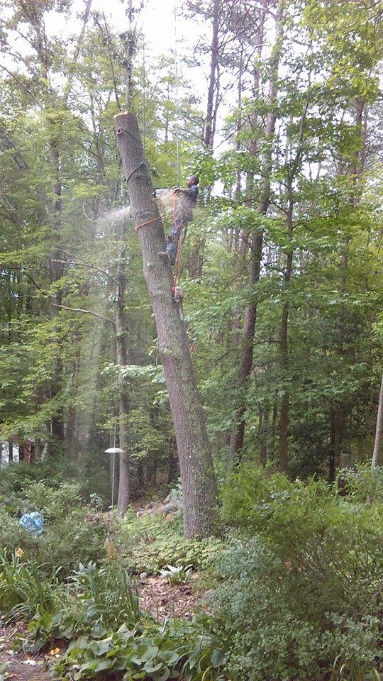 Furr's Tree & Landscaping