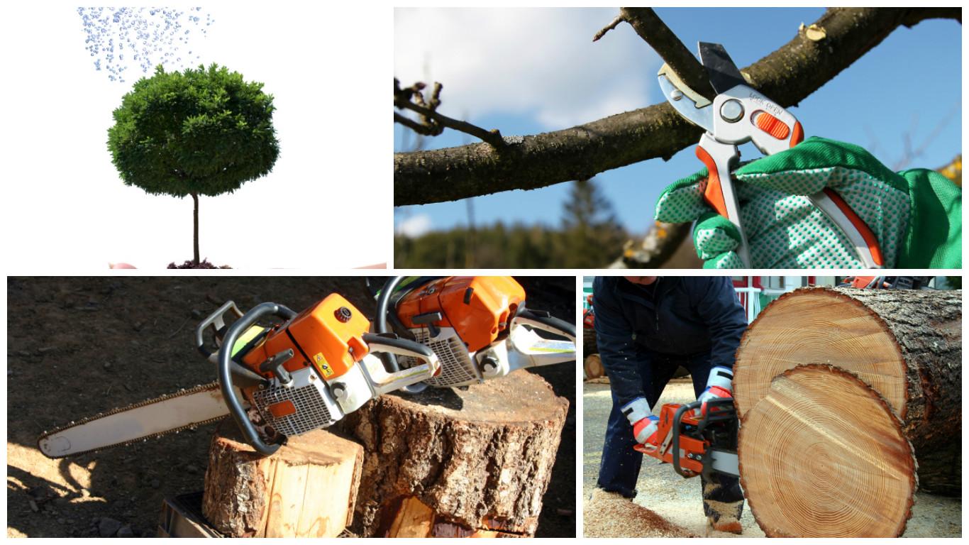 JV Tree Service LLC of Long Valley