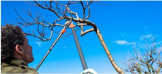 Tree Removal Services in Savannah Georgia