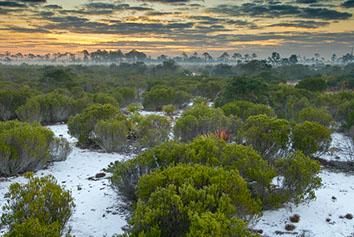 Conserve Florida Ecology and Ecosystem