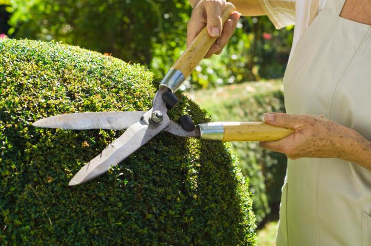 B&B Landscaping & Maintenance, LLC