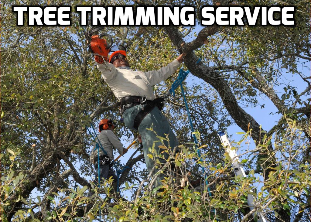 Tree Trimming Services in Richmond Virginia 804-207-5569