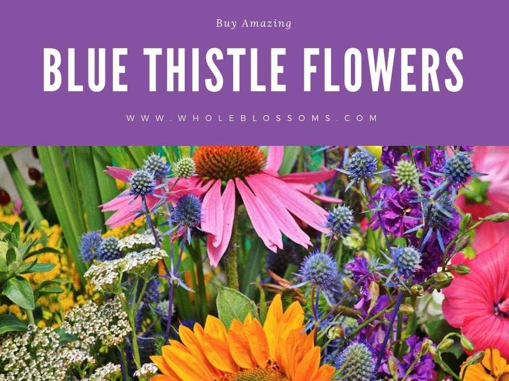 Order Blue Thistle Flowers Online