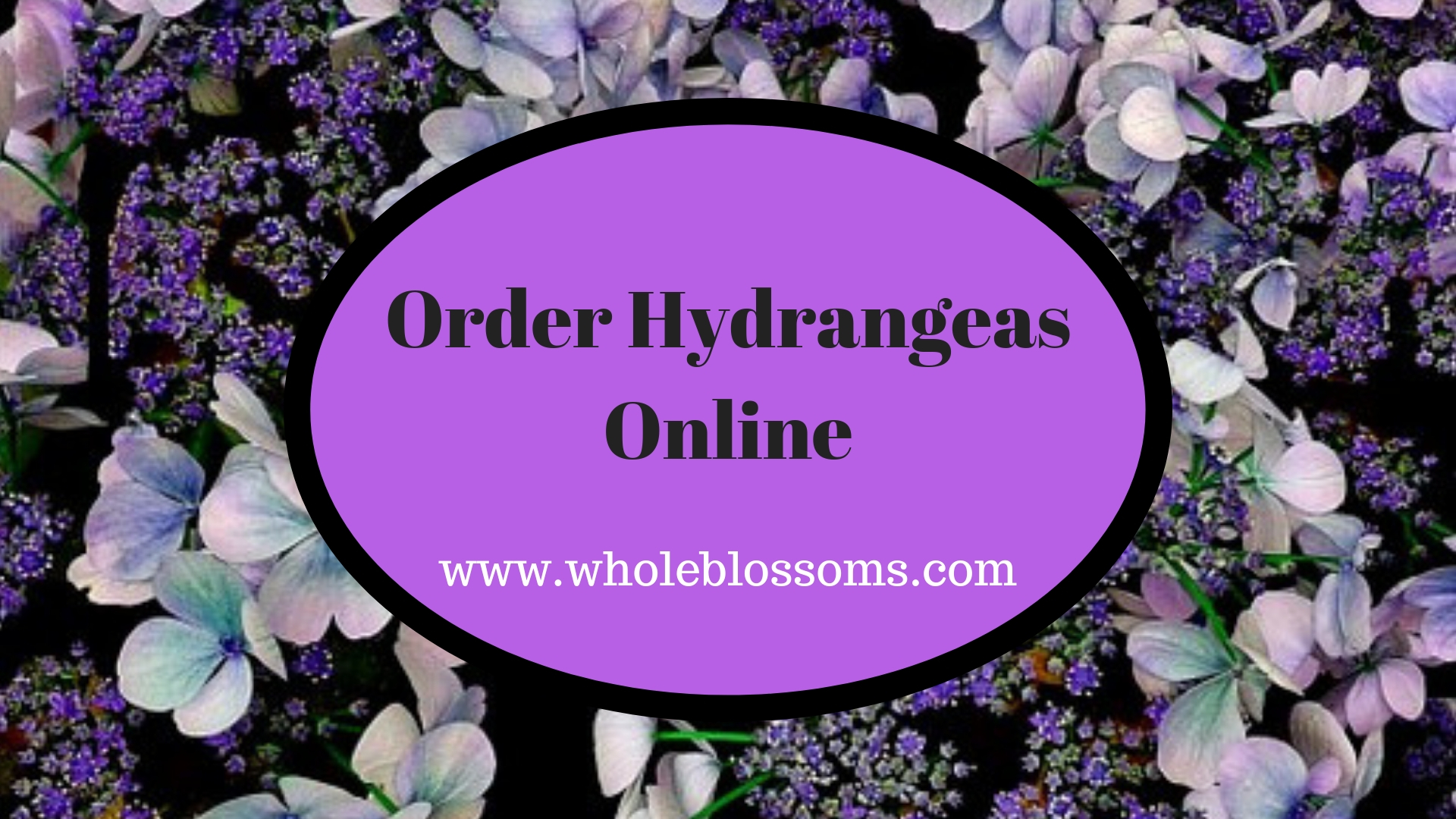 Purchase Natural & Fresh Hydrangeas Flowers Online