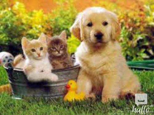 Products for cats and dogs