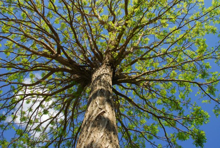 Gera's Tree Trimming