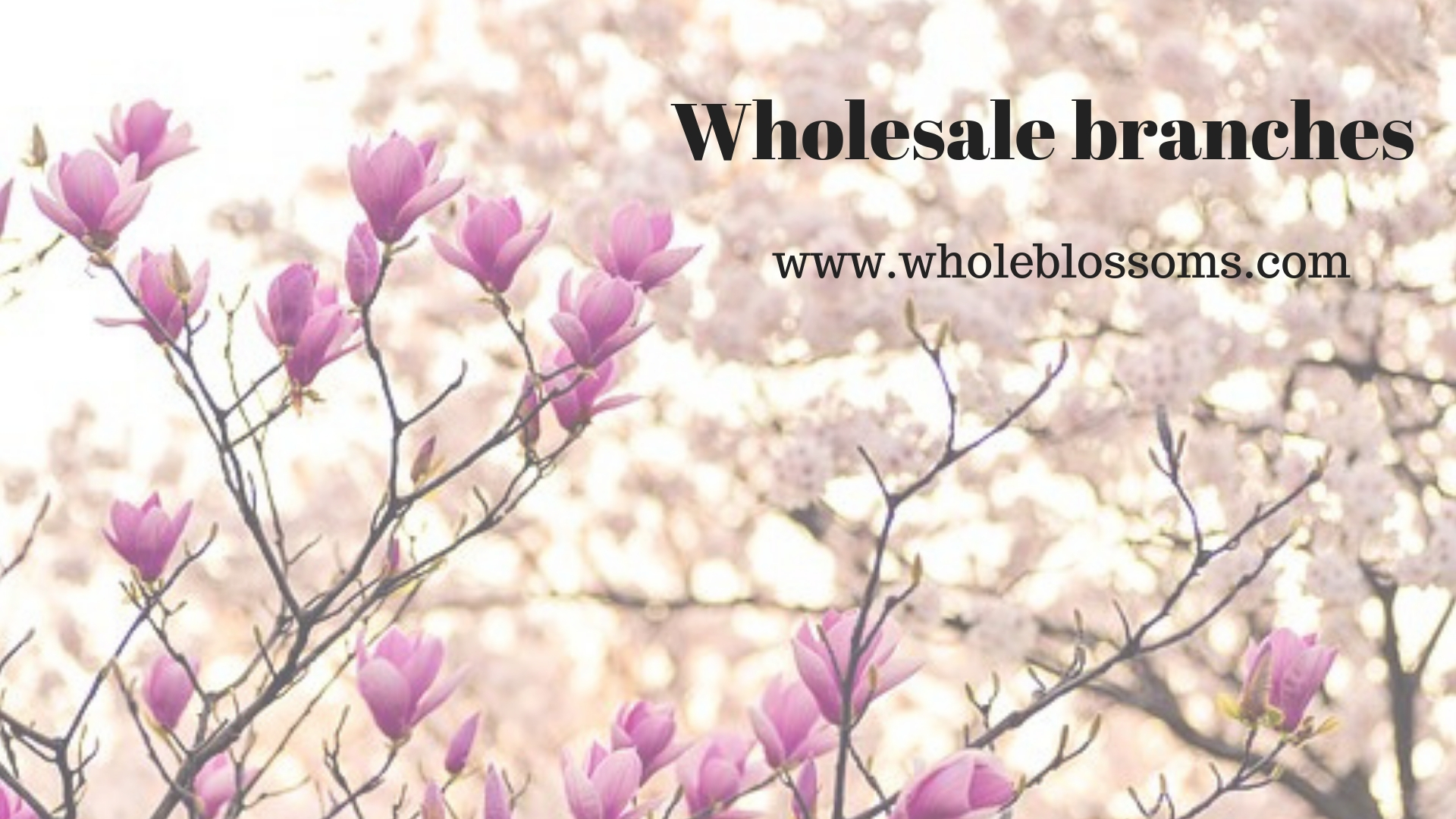 Buy Wholesale Branches from Whole Blossoms at the Effective Prices