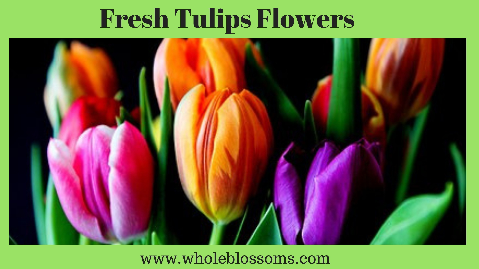 Choose and Order Fresh Quality of Wholesale Tulips for Sale