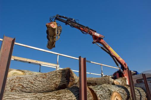 G & K Tree Specialists