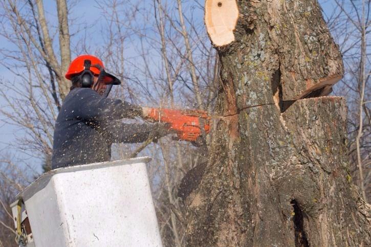 Doss Tree Service