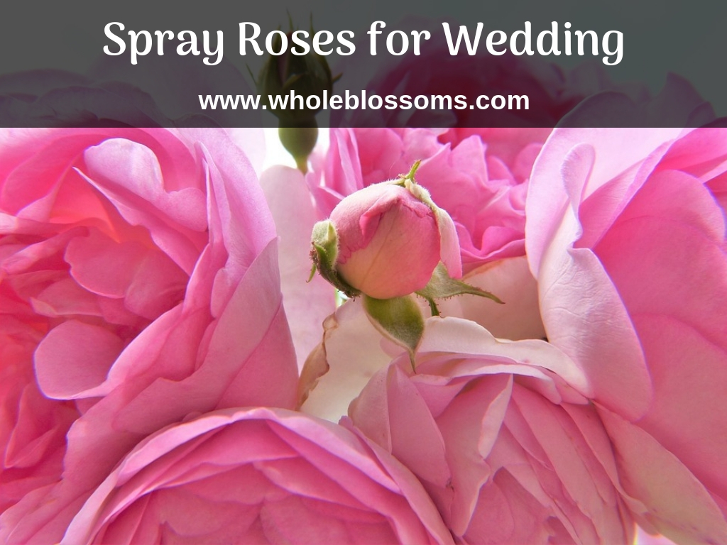 Order Best Spray Roses Colors for Your Wedding Location