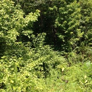 Vacant Land 4 sale in New Hope, Va