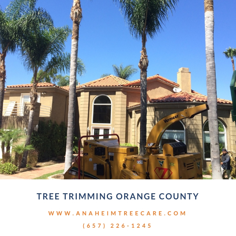 Tree Trimming Orange County CA