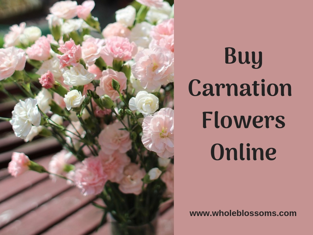Order Carnation Flowers with Free Delivery