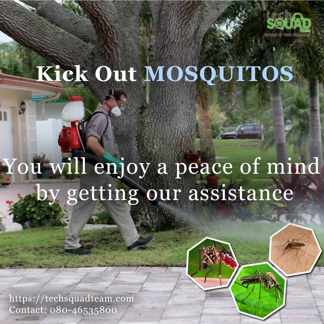 Flat 20% Off on Mosquito Pest Control Bangalore
