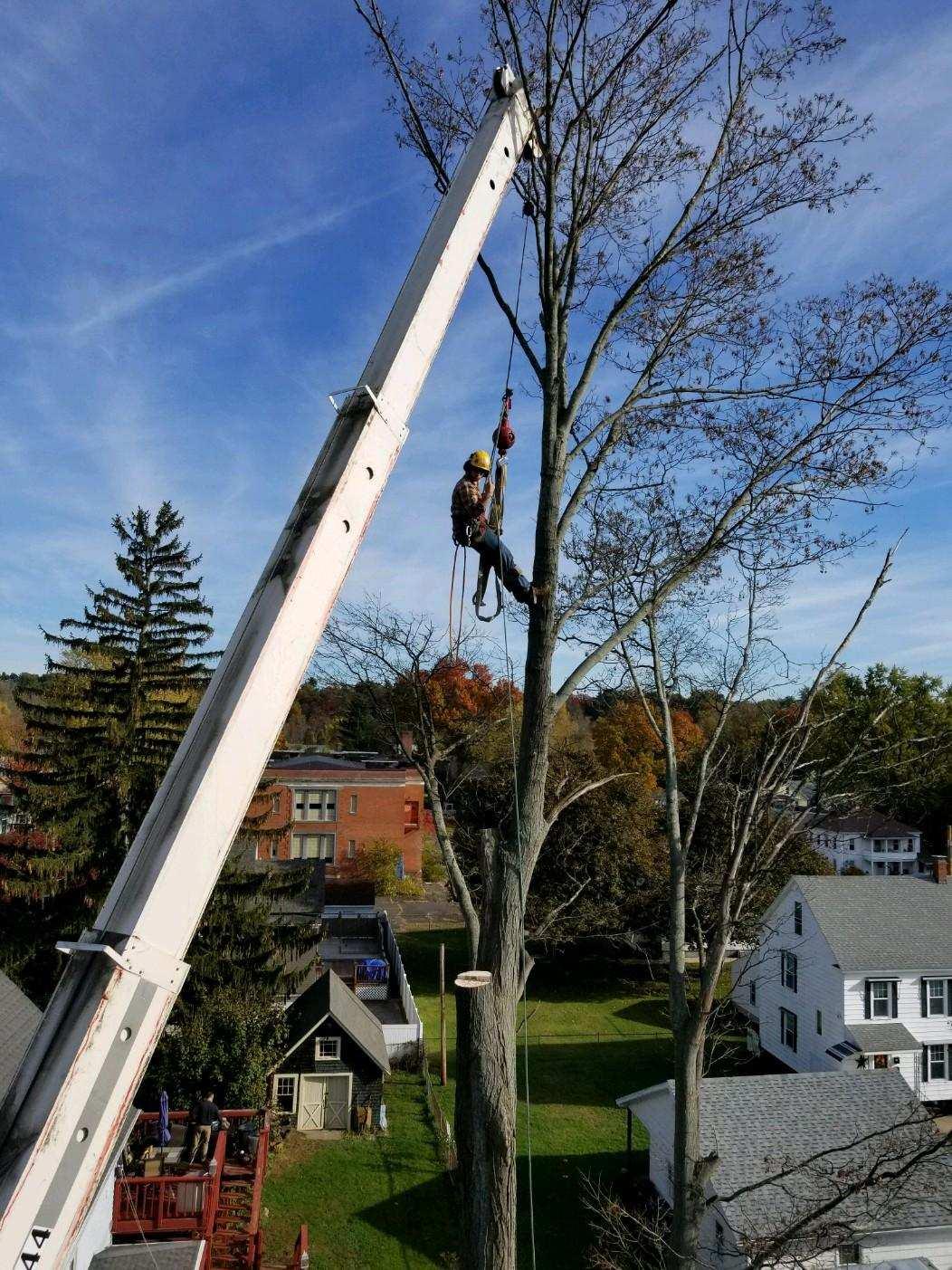Jeremy's Tree Service