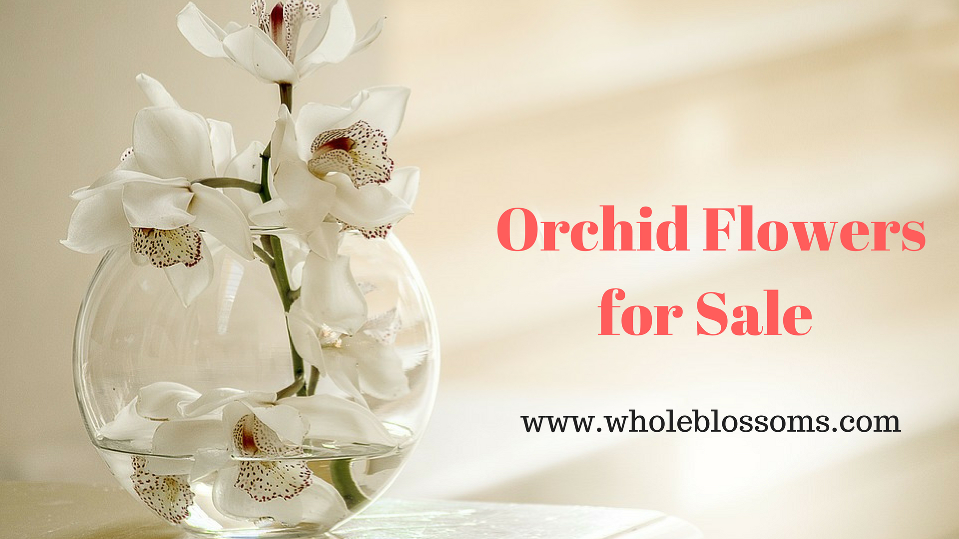 Purchase Special Orchid flowers for sale from Whole Blossoms