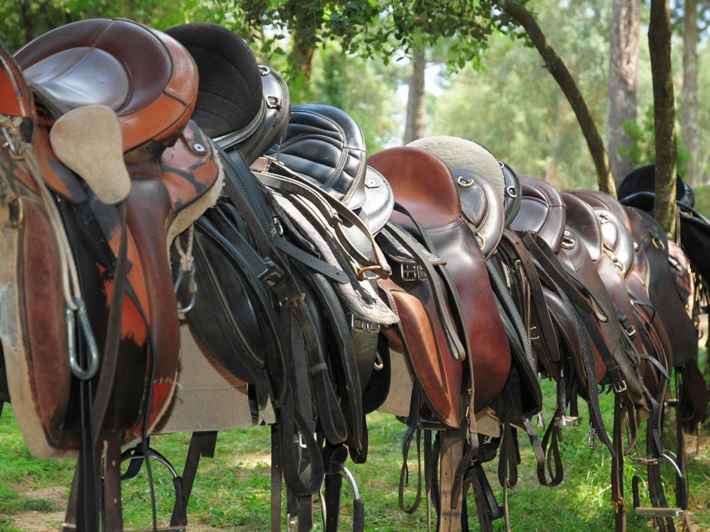 looking for your horse equipment?