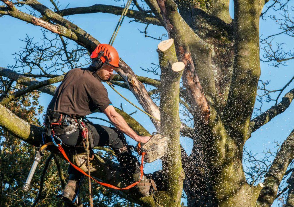 High Class Tree Service LLC