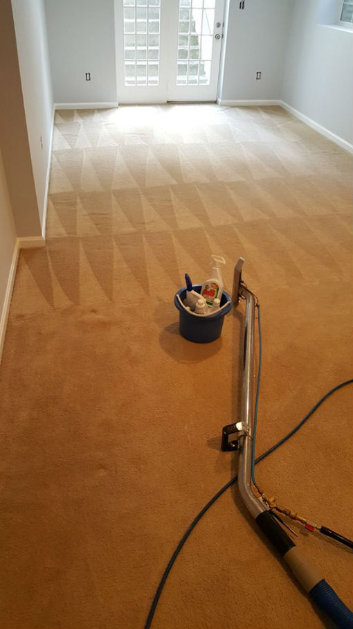 Professional Carpet Cleaning Plus