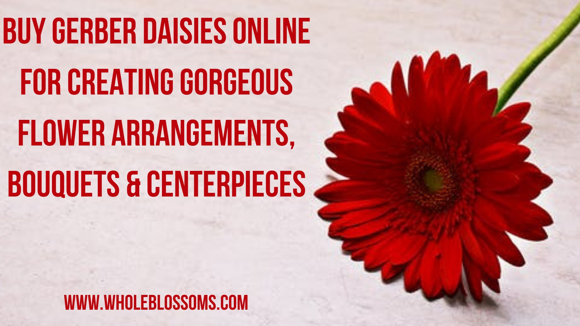 Get Gerbera Daisy Colors Flowers for Wedding Bouquets & Centerpieces