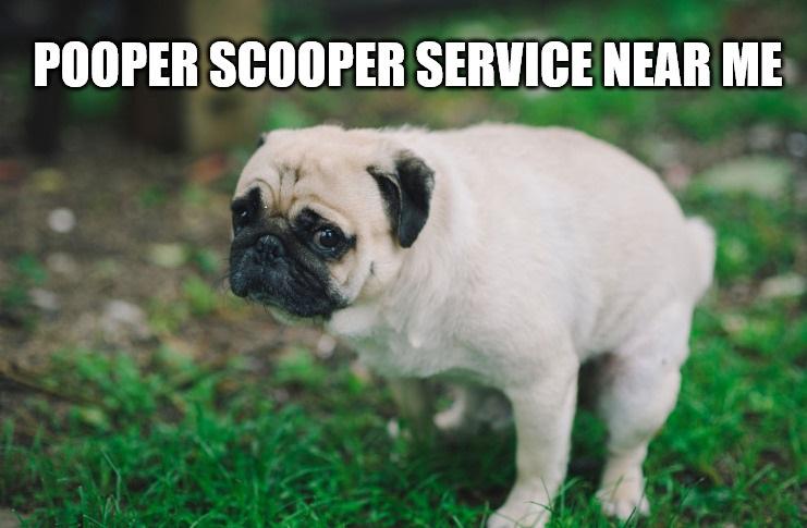Pooper Scooper Service Near Me By Ecoscooper