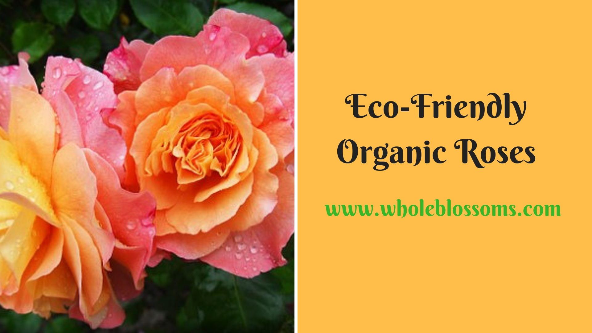 Where to Buy Organic Roses in Bulk