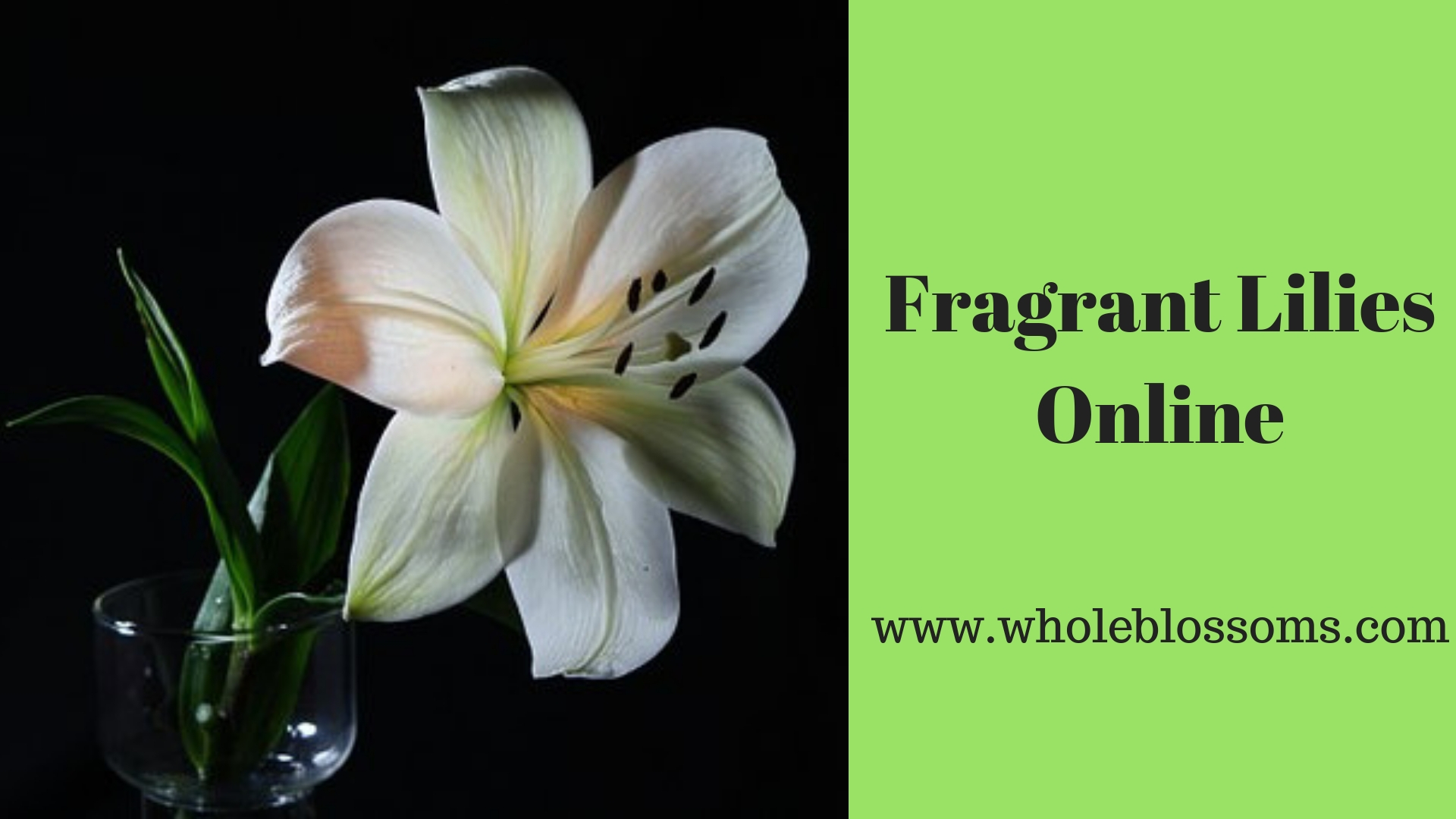 Purchase Fragrant Lilies at Most Resonable Prices