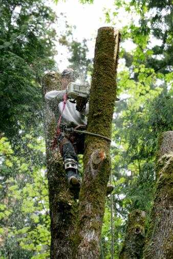 Harvey Tree Service