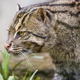Beast-Cats-02-005