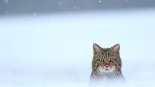 Beast-Cats-02-009.jpg