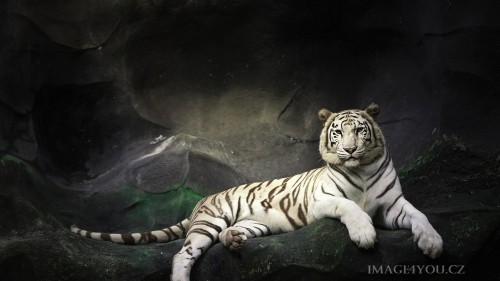 Beast-Cats-03-001.jpg