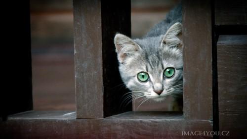 Cats-01-005.jpg