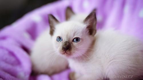 Cats-01-013.jpg