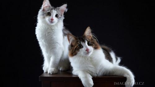 Cats-01-022.jpg