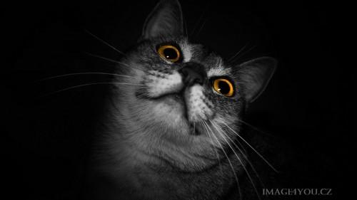 Cats-01-024.jpg