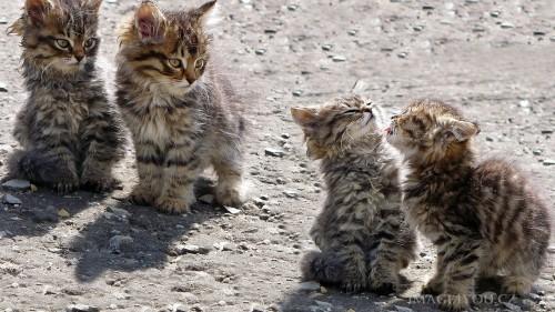 Cats-02-071.jpg