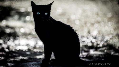 Cats-03-063.jpg