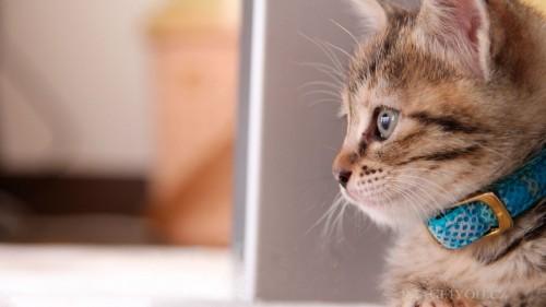 Cats-03-065.jpg