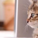 Cats-03-065