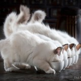Cats-03-066