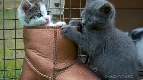 Cats-03-067.jpg