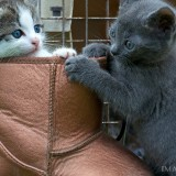 Cats-03-067