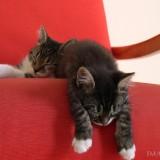 Cats-03-069