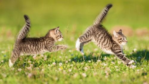 Cats #03 (070)