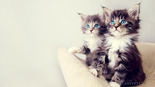 Cats-03-071.jpg