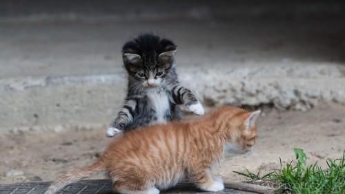 Cats-03-076.jpg