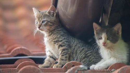 Cats-03-080.jpg