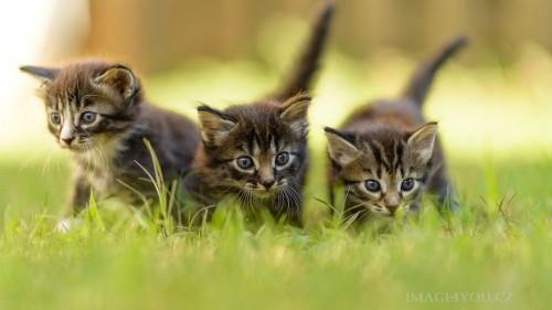 Cats-03-085.jpg
