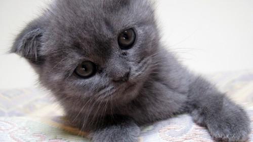 Cats-03-087.jpg